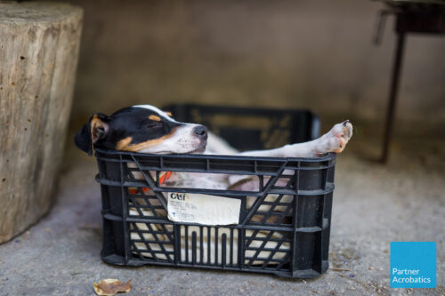 Cute dog in a basket at the location of partner acrobatics teacher training in Spain